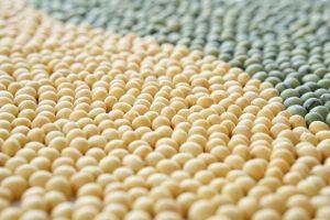 二色の大豆